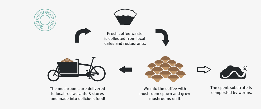 Circular economy of mushroom growing in used coffee grounds