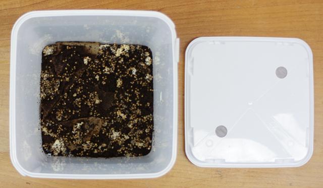 Sekoita kahvinporot ja sienirihmasto